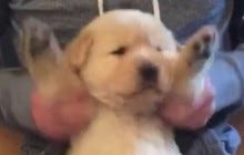 I Can Watch This Pup Crush Phil Collins On The Air Drums All Life Long