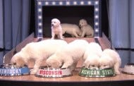The Conspiracy Continues…Puppies Predict Michigan State To Win National Championship