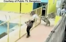 Wild Leopard Breaks Into School In India And Starts Mauling Everything In Sight