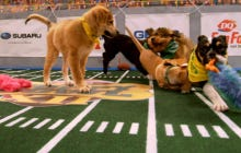Wake Up With Highlights From The 2016 Puppy Bowl