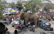 India Does It Again, Elephant Rampages Village Damaging Over 100 Buildings