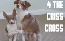 Please Enjoy These Pups Demonstrating Different Ways To Hug For V-Day