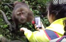 Monkey Swipes A Girl's Phone Before She Even Knows What Hit Her