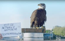 Canada Holding A Contest Where A Bald Eagle Will Deliver Beer Feels Like A Declaration Of War