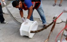 Man survives vicious python attack while on toilet