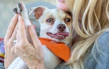 Shout Out To Bubba The Dog Who Is No Longer Addicted To Heroin After Being Rescued From His Junkie Owner