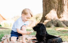 How About Little Prince George Thinking His Shit Don't Stink And Feeding A Dog Chocolate In This Picture?