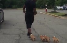 Bashaud Breeland Brought A Pack Of Bulldog Puppies To Redskins Park