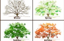 The Eliminator: Seasons