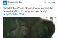 Don't Worry, Guys. Philly Is Single-Handily Saving The Zoo Gorilla Population