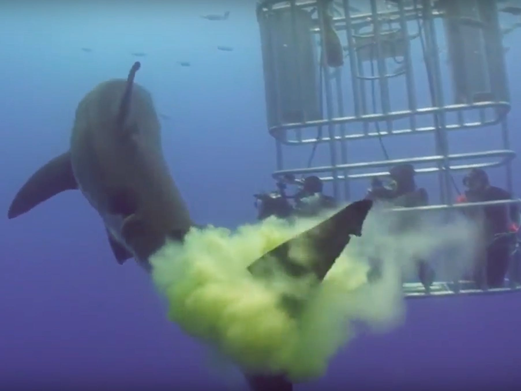 Great White Shark Does The Most Disrespectful Thing Ever And Poops All Over A Bunch Of Divers