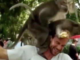 Two Monkeys Fuck Right On Some Dude's Ear