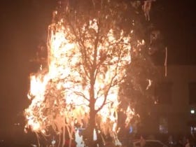 Somebody Lit The Damn Auburn Tree On Fire After the LSU Win