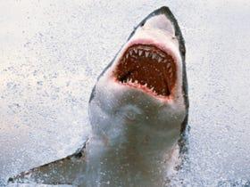 Surfer Who Fought Against Shark Barriers Bitten By Shark