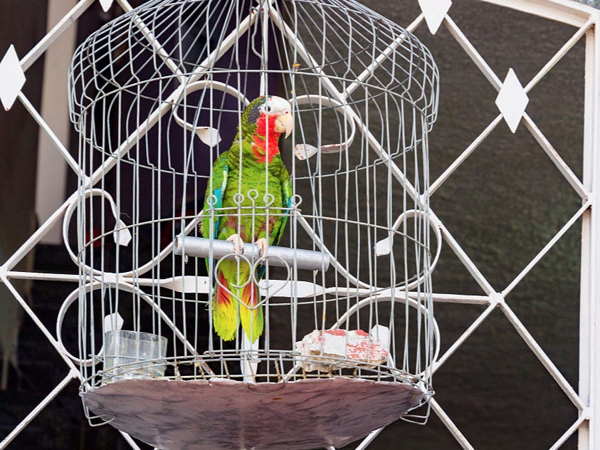 A Woman Found Out Her Husband Was Cheating With Their Maid Because Their Parrot Ratted Him Out