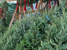 Christmas Trees Are Selling For $1,000 In Manhattan