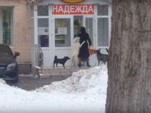 This Lady Who Got Mugged For Her Groceries By A Pack Of Dogs Probably Had It Coming