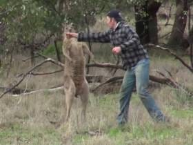 The Dude Who Saved His Dog By Punching A Kangaroo In The Face Is Holed Up In His House Because Animal Rights Activists Are Threatening His Life