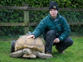 Shoutout To Bert The Turtle Who Had So Much Sex That He Wore Out His Legs And Had To Be Fitted For Wheels