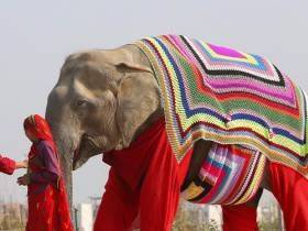Cute Ass Elephants Snuggle Up In Beautiful Jump Suits Because It's Cold In India
