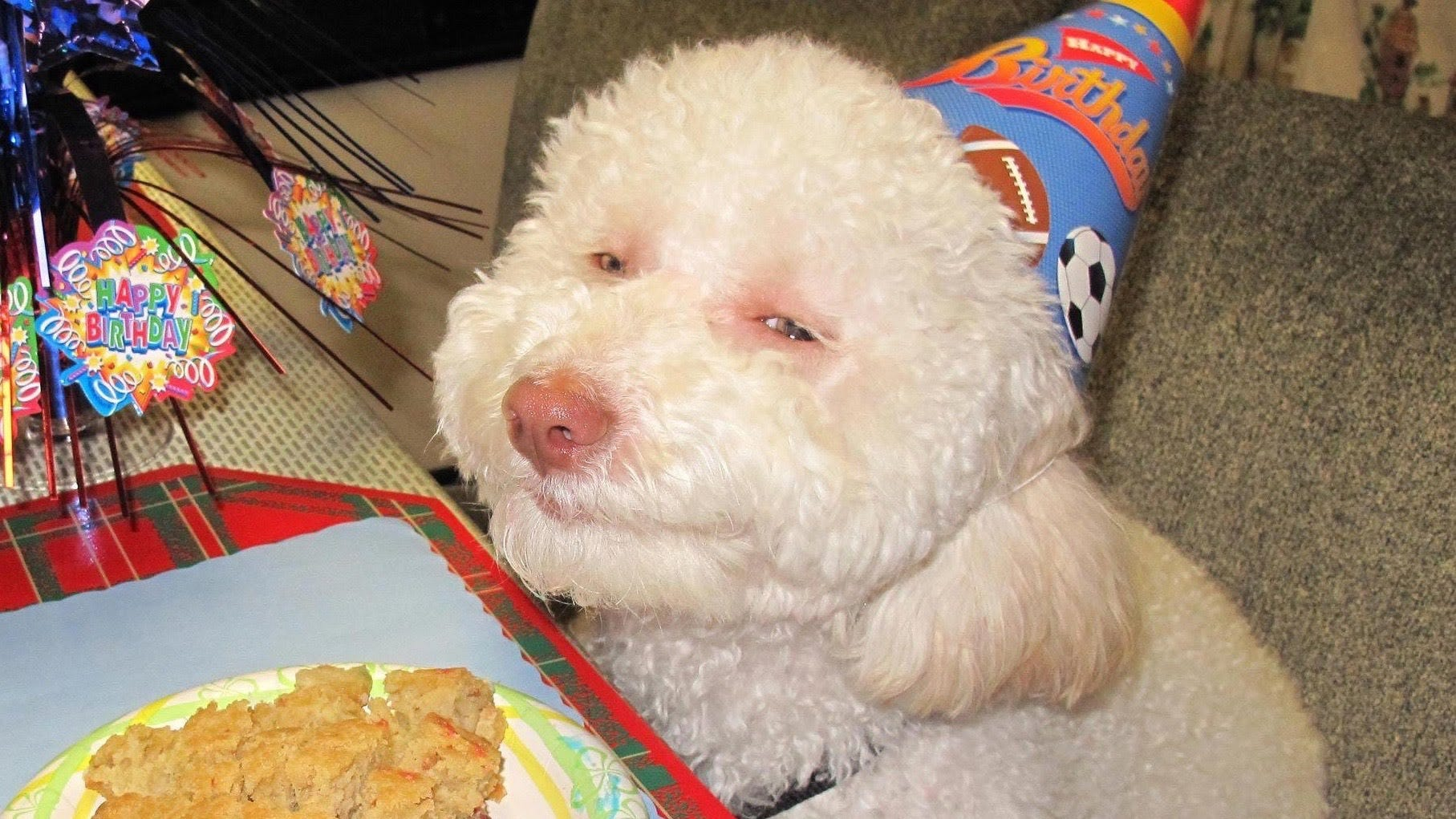 Stoned birthday dog - photo#5