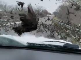 Mom And Daughter Murder Hundreds Of Birds By Driving Through Them