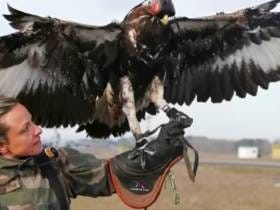 France Is Using Trained, Badass Eagles To Combat ISIS Flown Drones