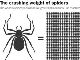 Spiders Could Eat Every Human On Earth In A Year If They Wanted To But They're Too Pussy