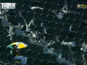 There Were More Seagulls Than Fans At The A's Game On Sunday