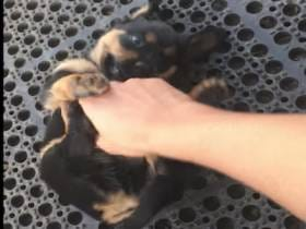 A Puppy Being Tickled Until He Falls Asleep Takes Us Into The Weekend
