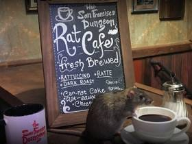 There Is A Rat Cafe In San Francisco And You Have To Be An Absolute Asshole If You Eat There