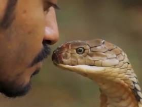 Kissing Rattlesnakes Is A Bad Idea Because It Will Most Likely Land You In Critical Condition