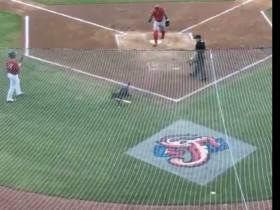 Huge Shoutout To The Bat Dog At The Jacksonville Jumbo Shrimp Game.
