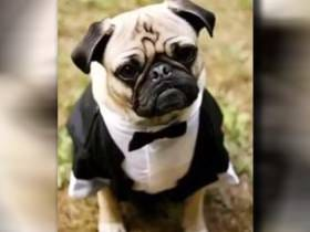 A Former Government Secretary Is In Trouble After Using County Funds To Buy Her Dog A Tuxedo
