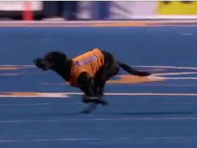 The Dog Who Retrieves The Tees After Boise State Kickoffs > Thursday Night Football