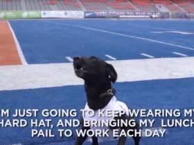 The Boise State Kicking Tee Retrieving Dog Has Won Barstool's Football Guy Of The Week