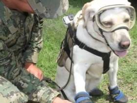 Frida The Dog With 52 Career Lives Saved Is Hard At Work On The Mexico Earthquake