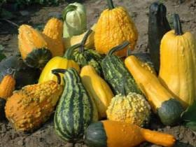 An Open Letter: I'm Sorry For Trying To Dick Down A Pumpkin