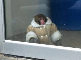 Where Are They Now: The 5 Year Anniversary Of The IKEA Monkey
