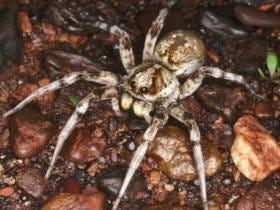 A Guy Caused $11,000 Worth Of Damages To His Apartment Trying To Kill A Spider