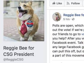 Michigan Students Are Trying To Elect Their Campus Corgi Therapy Dog As Student Government President
